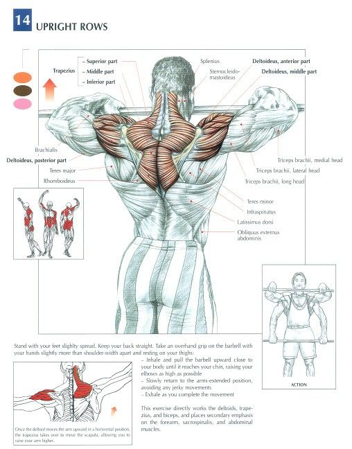 guide des mouvements de musculation strength training anatomy chest poster