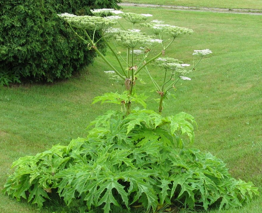guide to weed control ontario