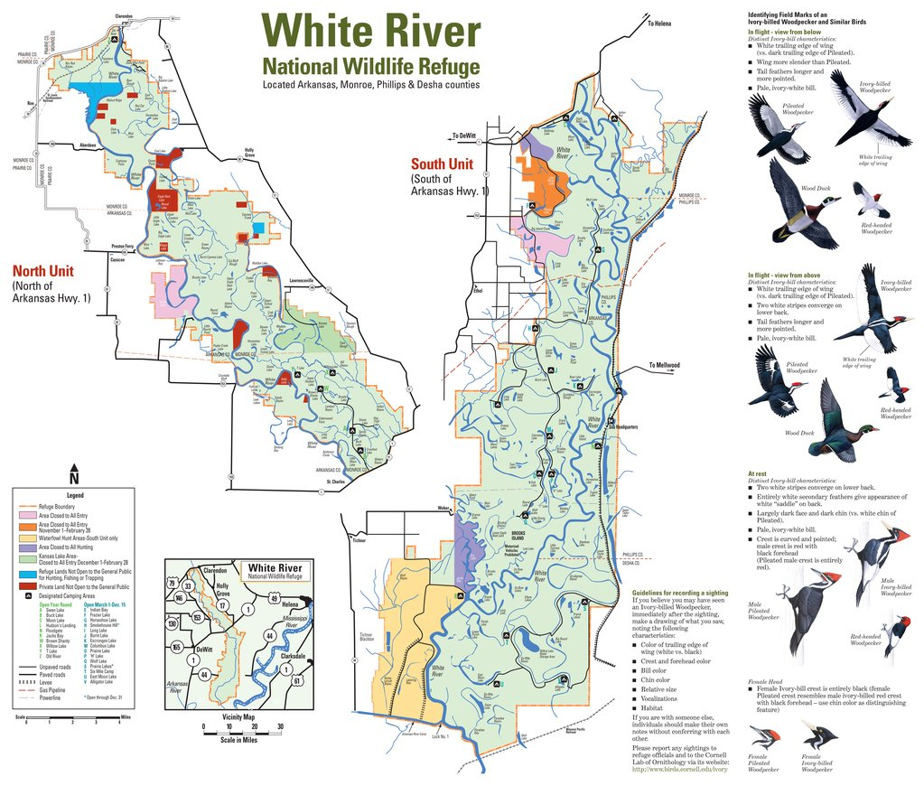 white river trout fishing guides
