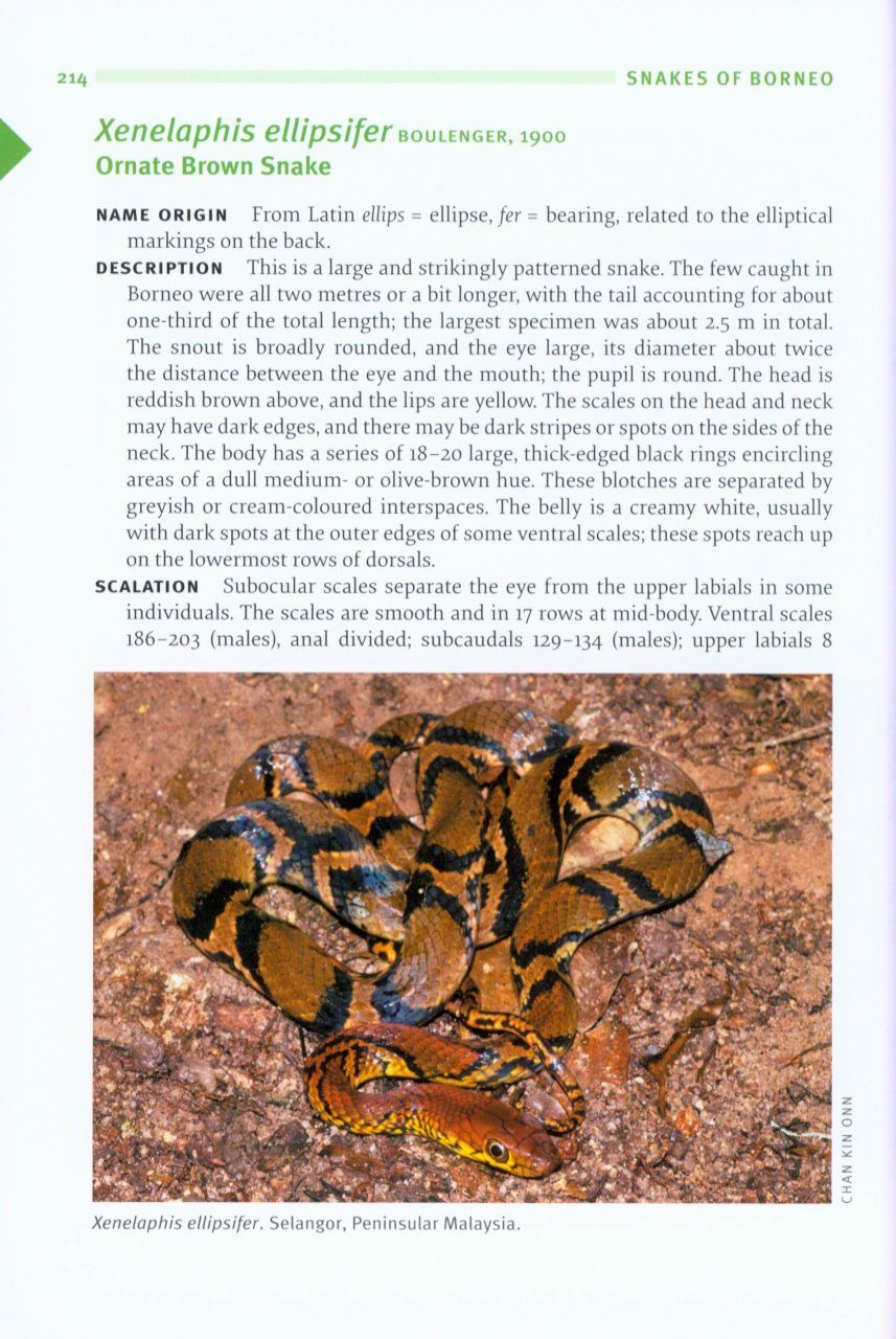 indian snakes a field guide
