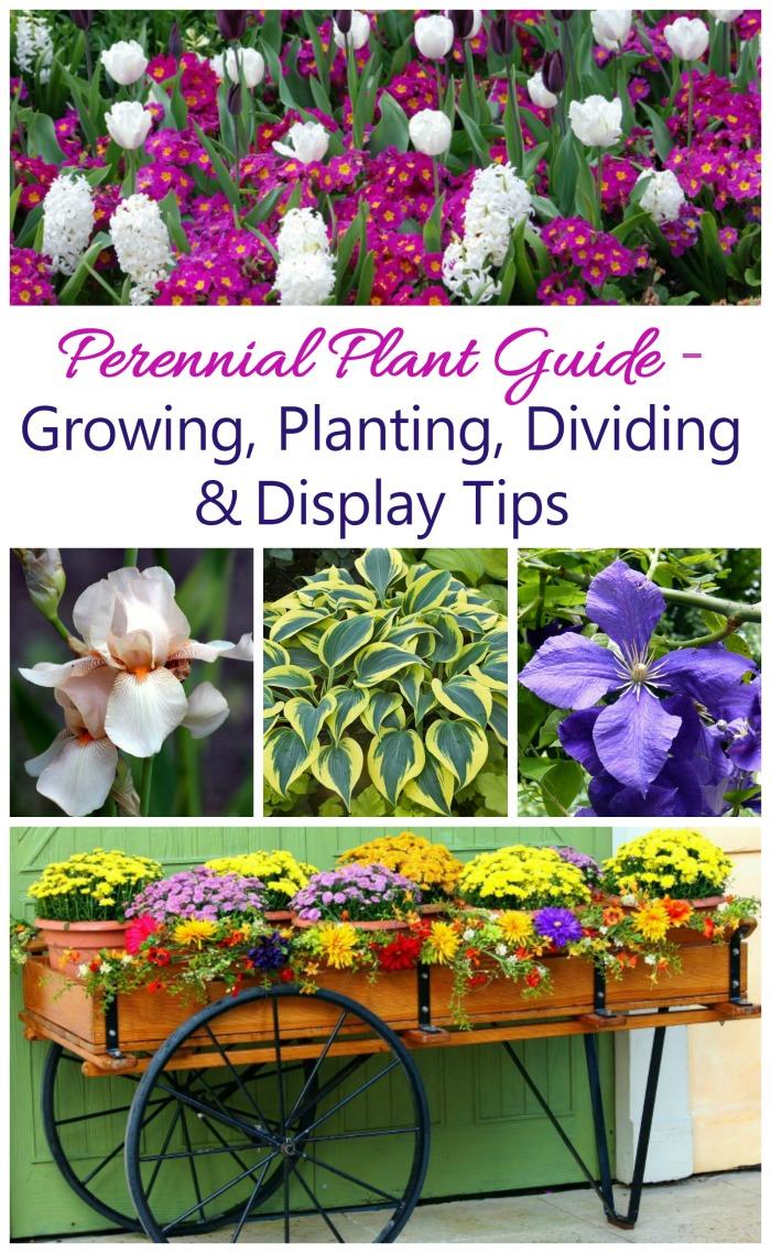 april planting guide vegetable garden