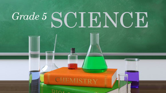 5th grade science cell study guide
