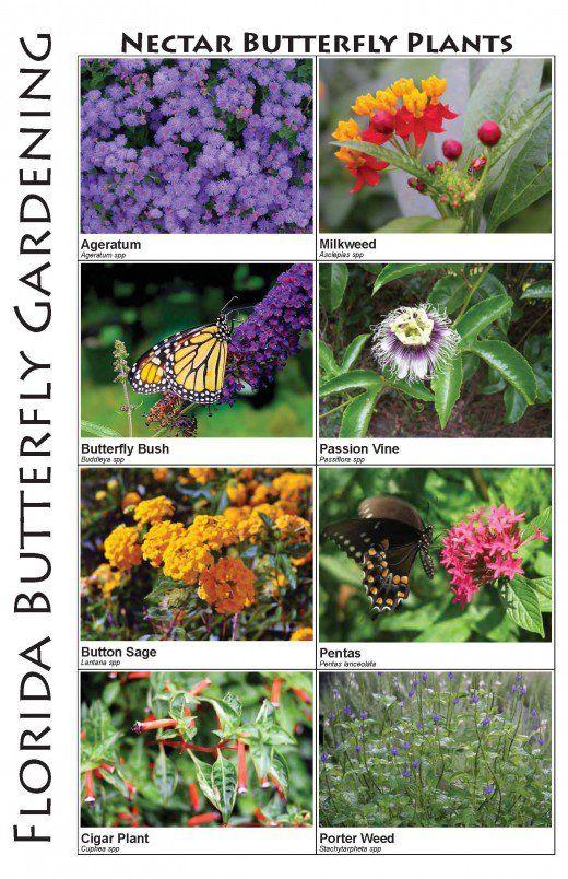 midwest landscape plants a pictorial guide