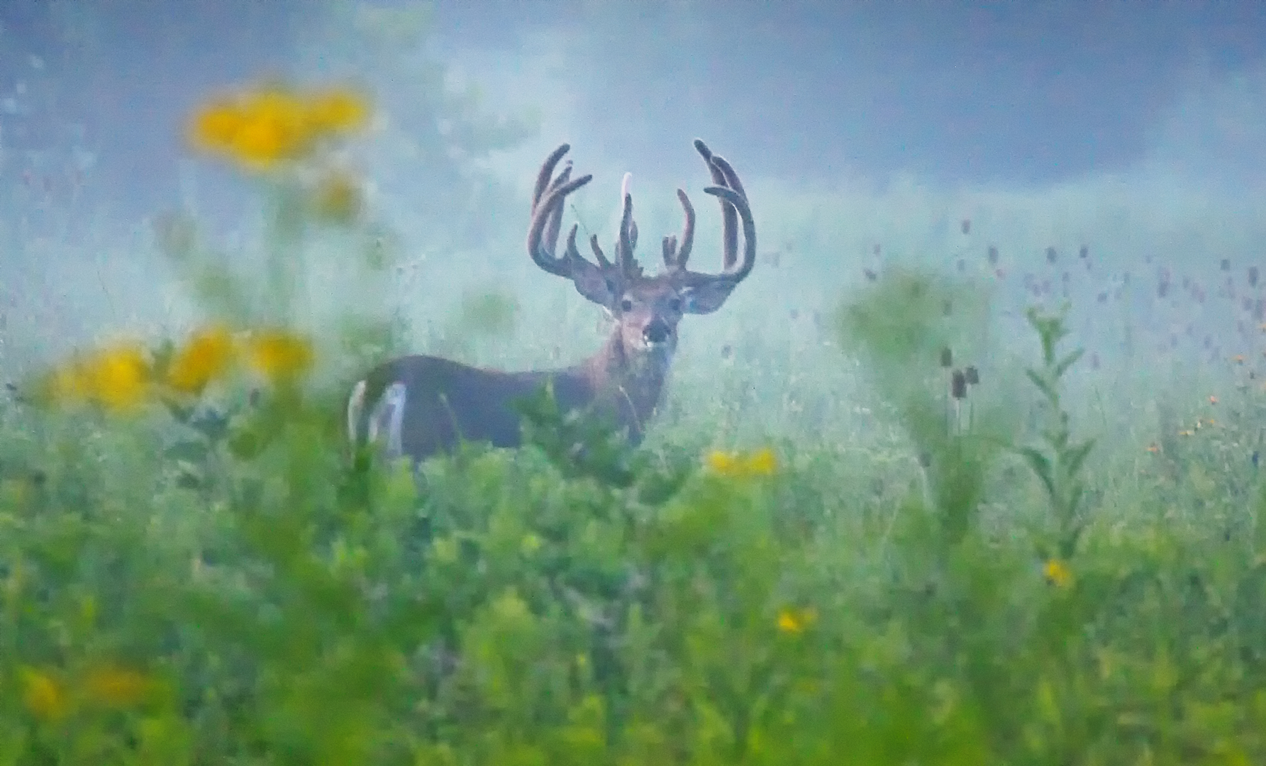 red deer fall activity guide