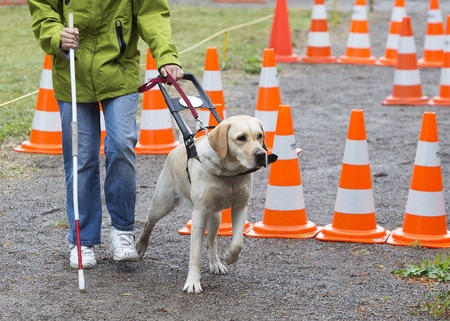 how to guide dogs know where to go