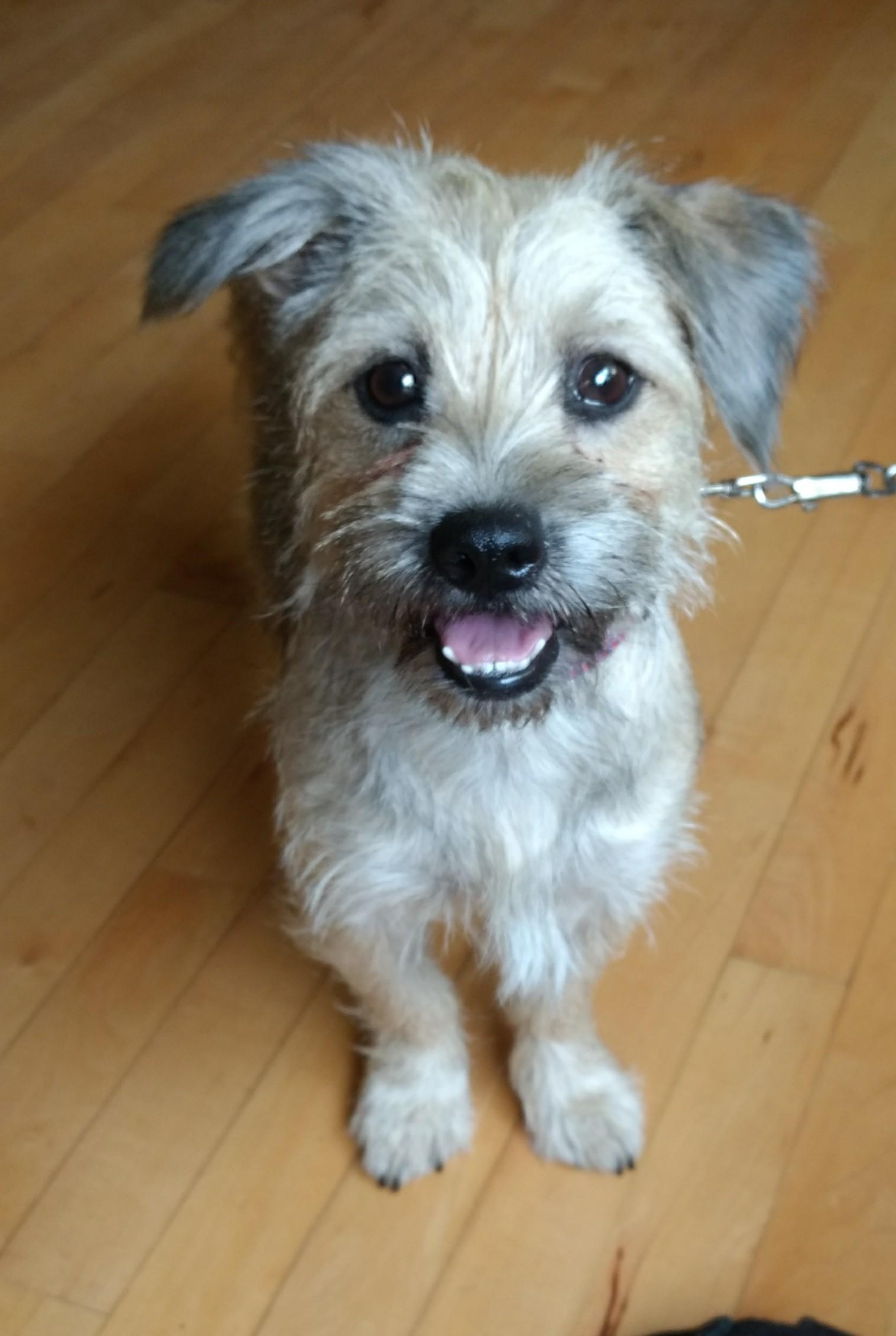 failed guide dog adoption canada