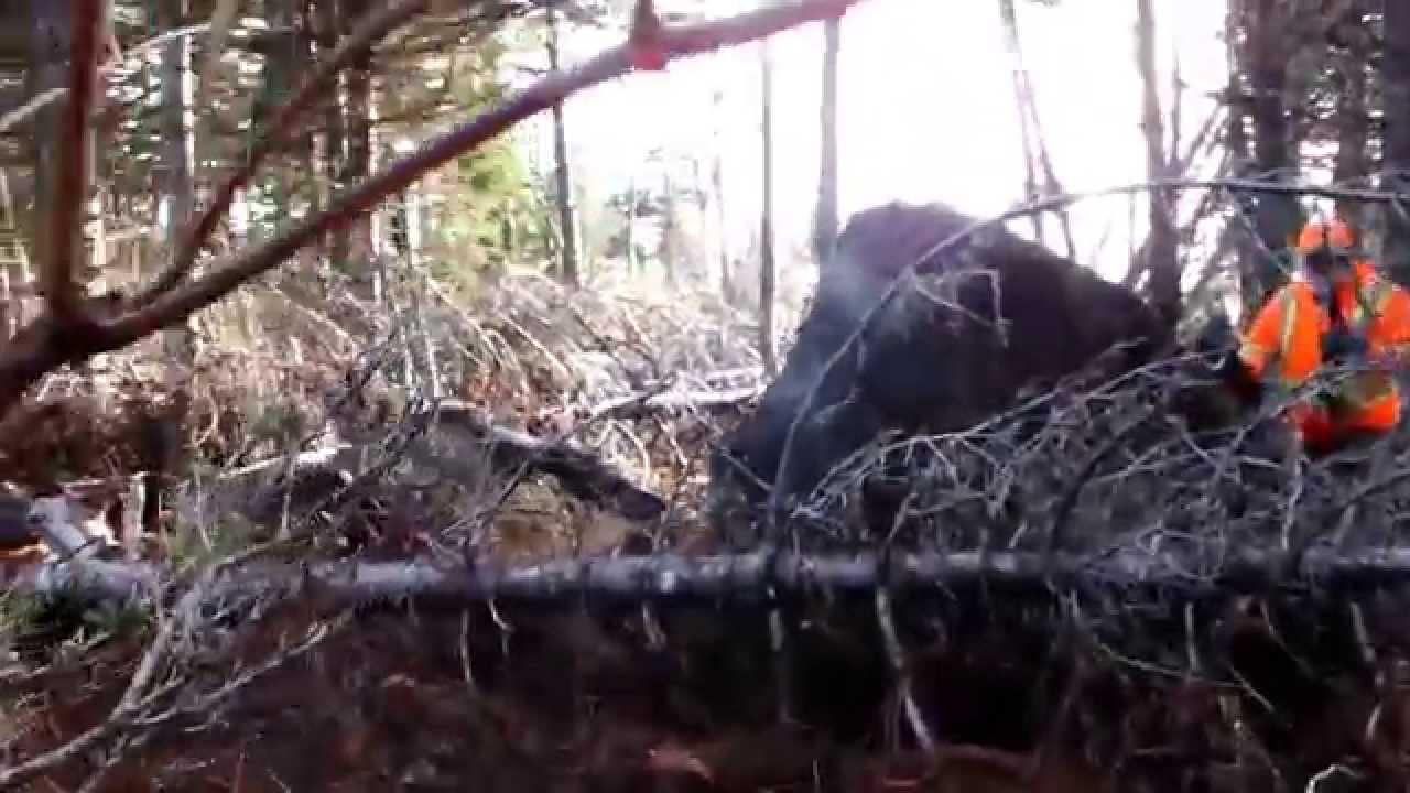 cape breton moose hunting guides