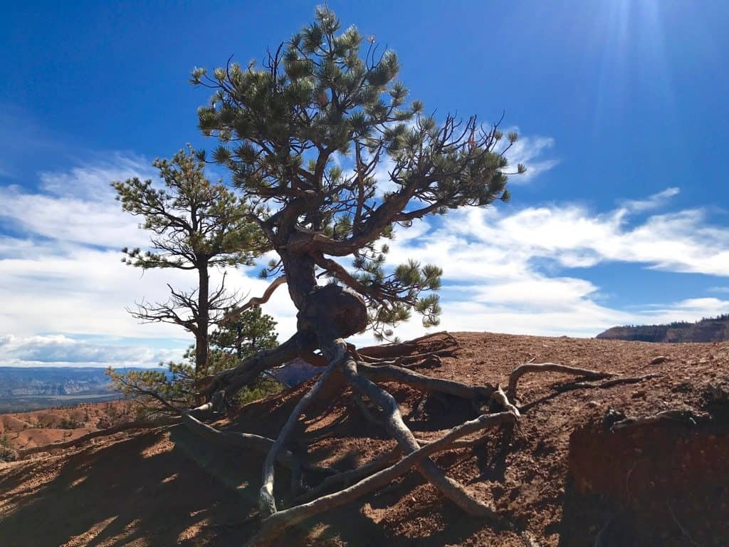bryce canyon guided hiking tours