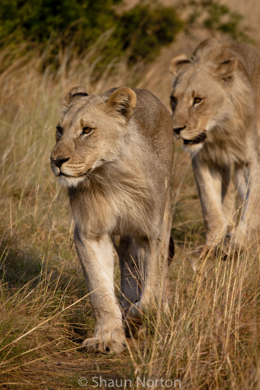 field guide training south africa