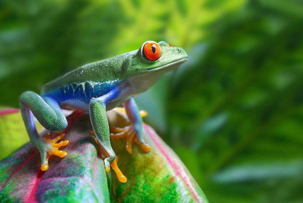 guided trips to costa rica